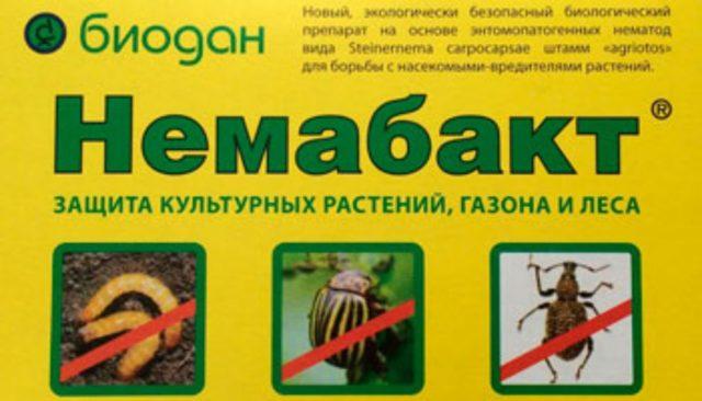 Гусеницы на смородине: почему заводятся и что делать