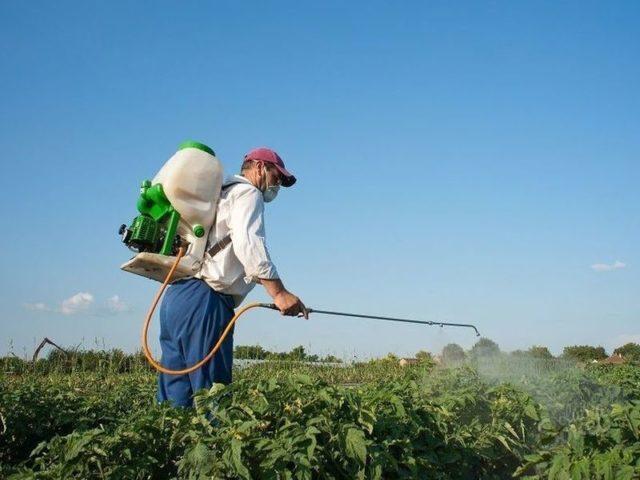 Фунгицид Топаз: как правильно применять для надежной защиты растений от болезней