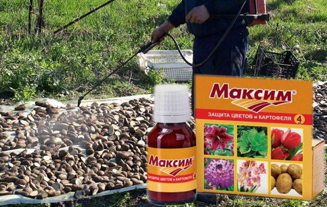 Фунгицид Максим: лучшее средство для протравливания семян и почвы