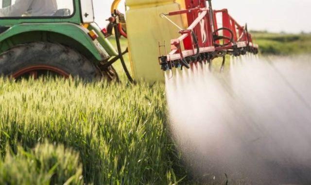 Фунгициды Альто Супер и Турбо - гарантированная защита зерновых культур
