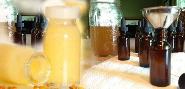 Что такое пчелиное (маточное) молочко: лечебные свойства и противопоказания, применение