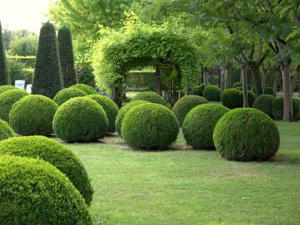 Стрижка самшита: весной, осенью, сроки и правила