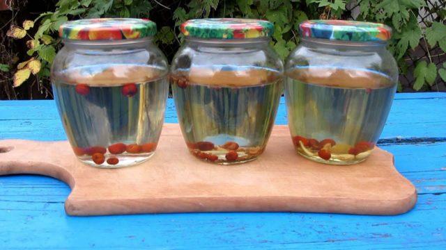 Можжевеловая водка: рецепты приготовления в домашних условиях