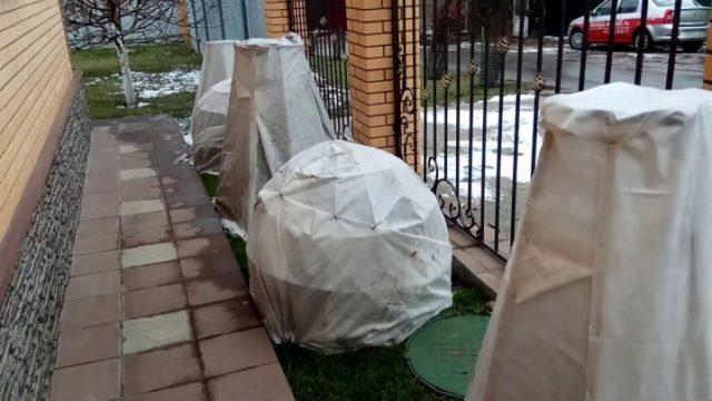 Посадка и уход за самшитом в Подмосковье в открытом грунте