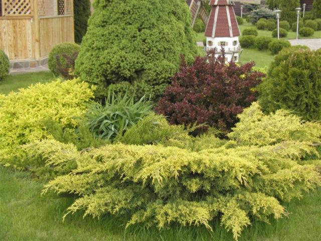 Можжевельник горизонтальный Лайм Глоу: фото в ландшафтном дизайне сада