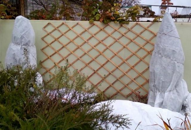 Можжевельник скальный Блю Эрроу: фото в ландшафтном дизайне