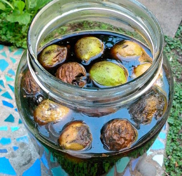 Настойка из маньчжурского ореха: рецепты, лечебные свойства, отзывы