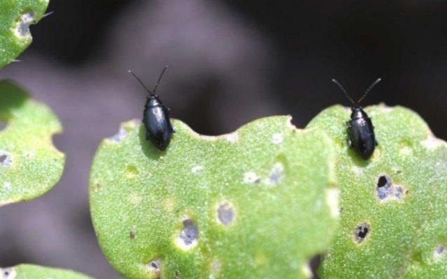 Когда сажать редиску в теплицу из поликарбоната ранней весной