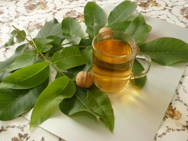 Листья грецкого ореха: полезные свойства и противопоказания, применение