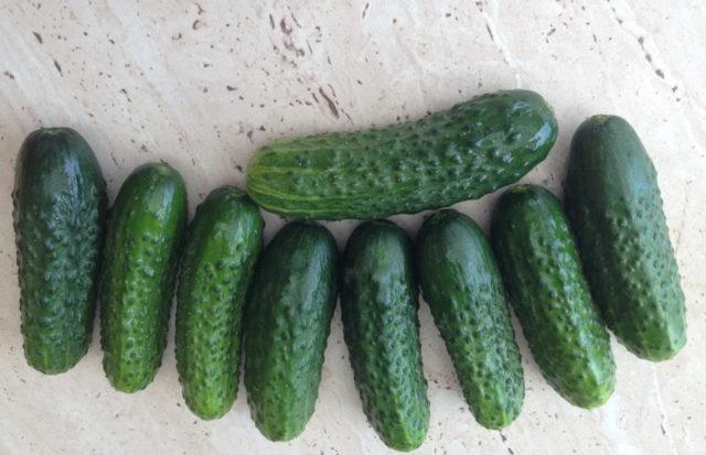 Огурец Пасалимо F1: отзывы, фото, урожайность