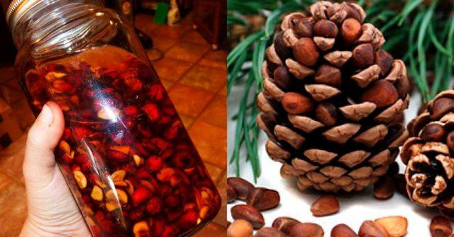 Самогон на кедровых орехах: рецепты на скорлупе, очищенных орешках