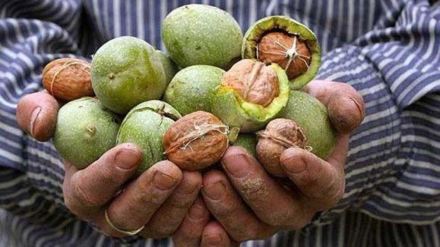 Как и чем отмыть руки от грецких орехов: эффективные способы
