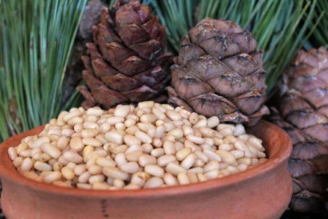На каком дереве растут кедровые орехи