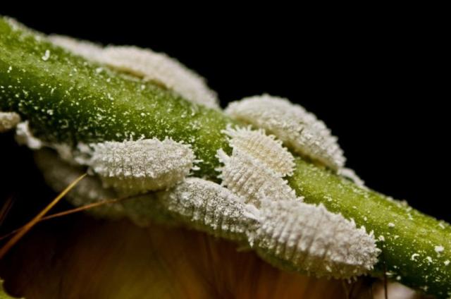 Почему лиственница сбрасывает листья на зиму