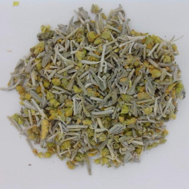 Полезные свойства татар-чая (лимонника крымского) и противопоказания