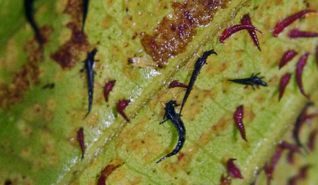 Вредители капусты и борьба с ними: народные средства, способы, фото