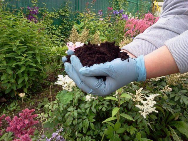 Чем и как можно закислить почву для гортензии