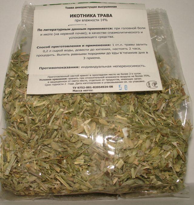 Икотник серо-зеленый (серый): описание, лекарственные свойства, фото
