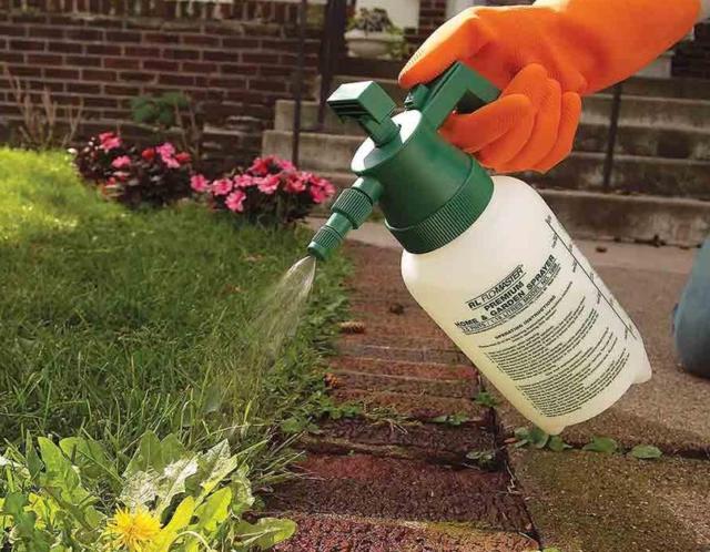 Как поменять газонную траву?