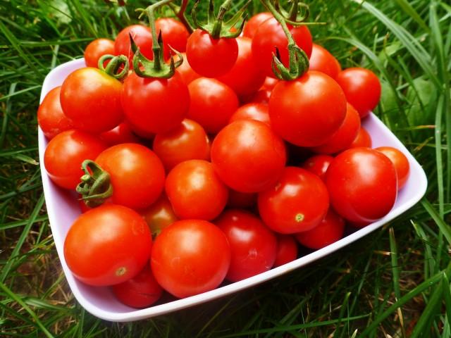 Какие томаты лучше выращивать в ленинградской области?