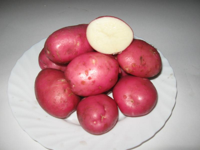 Лучшие поздние сорта картофеля: посадка и уход
